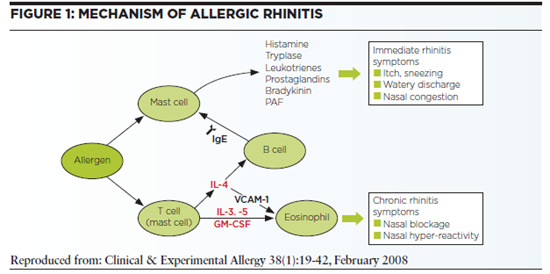 mechanism of allergic rhinitis