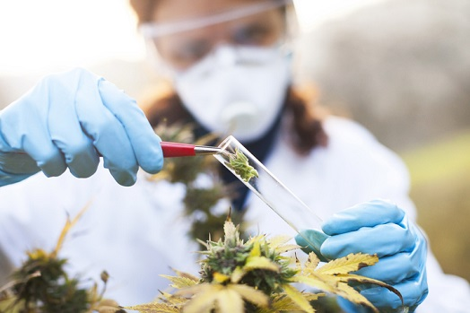 NICE calls for more research into cannabis-based medicinal products